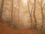 Autumn Mist ; comments:38