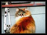 Cat ; comments:9