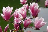 Още нещо за пролетта ; comments:13