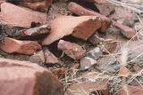 Открий животното Намибия ; comments:7