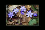 Пролетно синьо ; comments:22