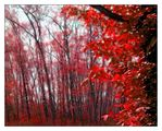 red forest ; comments:32