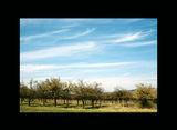 Ябълковите градини ; comments:14