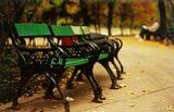 Есен в парка ; comments:34