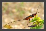 Чудесата на живата природа ; comments:14