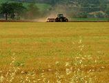 селско лято ; comments:20