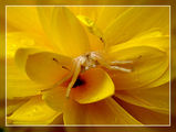 Симфония в жълто ; comments:17