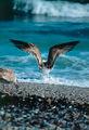 Морето ; comments:31