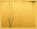 Приказка за златната вода ; comments:42