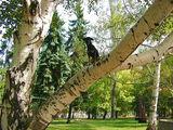 Кацнал на 1 дърво! ; comments:11