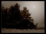 Зима е, вънка вие вук... ; comments:50