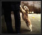 Зло куче ; comments:32