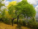 Смяната на сезоните ; comments:44