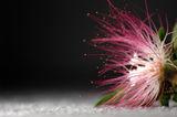 Flower ; comments:34