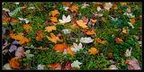 есен по тревата ; comments:75