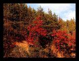 Есен златна, едни умират за да се възродят отново, други остават... ; comments:24