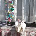 котка на простор ; comments:48