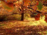 Близки спомени от есента 1 ; comments:65
