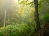 Deep Forest ; comments:60