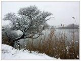 зима ; comments:43