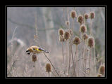 no name ( ID=60645 ) ; comments:57
