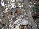 Зимна приказка за малки сови ; comments:112