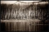 По реката ; comments:32