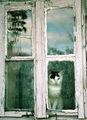 На прозореца ; comments:53