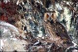 Зимна приказка за малки сови - част III /последна/ ; comments:92