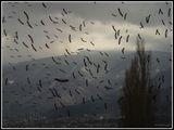 Птиците ; comments:79