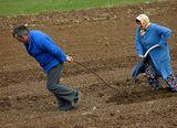 Ежедневие,Парадоксите на 21век-Семейство от пловдивското село Мулдава подготвят нивичката си за посев ; comments:15