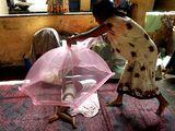 Световни събития ,Коломбо – столицата на Шри Ланка, бежански лагер; майка, чието жилище е разрушено от вълната цунами покрива с мрежа детето си ; comments:8