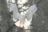 Въздушен танцьор ; comments:60