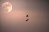 Обиколка на Луната ; comments:73