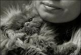 ...още котки  :-))) 1... ; comments:25