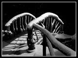 mostut na vuzdi6kite ; comments:53