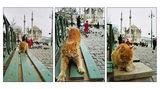 Един следобед на произволно избран истанбулски котарак ; comments:31