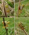Най-обичам луди, луди жаби... ; comments:29