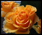 Златна роза ; comments:39