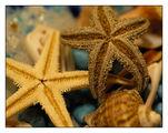 С мирис на море ; comments:26