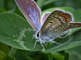 Butterfly_2 ; comments:82