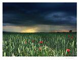 дъжд на хоризонта... ; comments:65