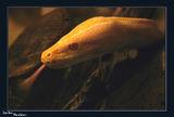 Змия ; comments:30