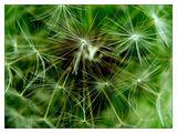 Морско зелено... ; comments:18