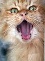 Satanic Cat ; comments:23