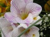 Flora ; comments:6