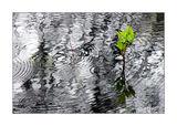 Пролетен дъжд ; comments:107