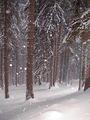Снежна гора ; comments:37