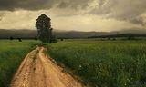 дърво на пътя ; comments:31