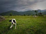 куче,камъни,самотно дърво ,поле и Рила планина ; comments:51